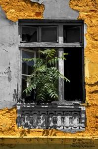 Всичко може да се заснеме от професионален фотограф град Варна