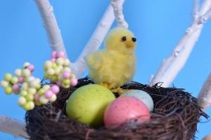 Пиленце кацнало в гнездо, част от декорите на фотограф Варна
